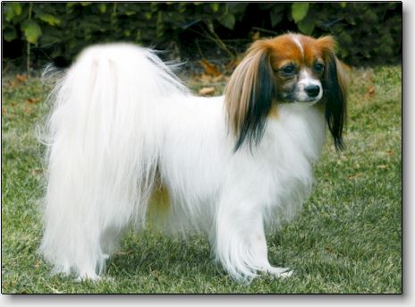 Fancy pictured for the Danish kennel club's magazine