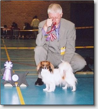 Fancy at 3 years, CAC, Best Female & Danish champion!