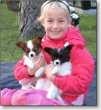 Blicci Papillon And Phalene Puppies